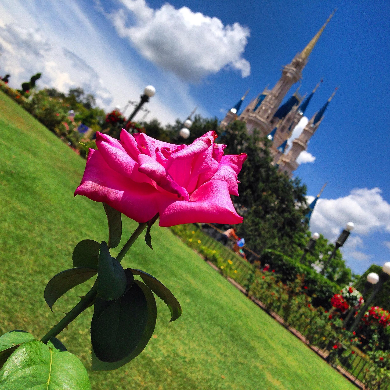 Ponto Orlando Dicas da Disney Experts 002