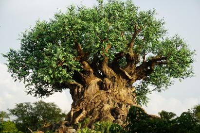 Ponto Orlando Dicas da Disney As menores Filas NEW 006