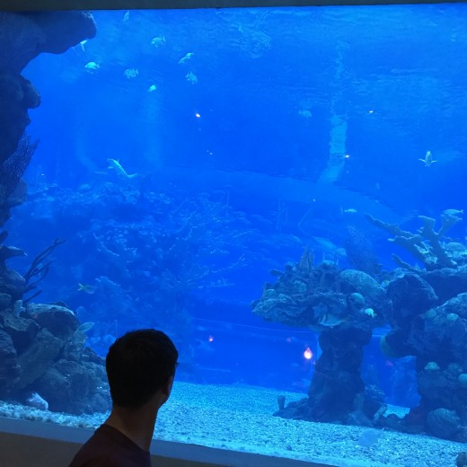 Ponto Orlando Restaurantes na Disney Coral Reef 002